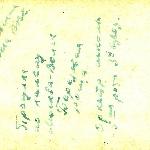 Надпись на обратной стороне фотографии