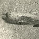 Третий осваиваемый нами самолет в училище — Ла-9. Моя фотография. Лето 1953 год.